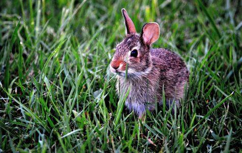 Ex-test bunnies get own island