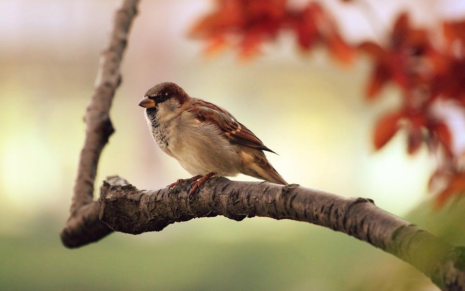 Bird banding station open for business