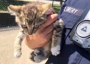 Officer Randy Emery holds up a kitten he found behind an engine. Emery has adopted Mini after hearing the sounds of an animal in distress coming from a minivan on campus.